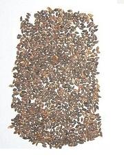 Семена лиственницы сибирская лиственница