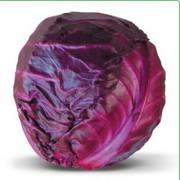 Предлагаем купить семена краснокочанной капусты Kioto F1 (КИТАНО)