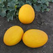 Предлагаем купить семена дыни Agasi F1 / Агаси (КИТАНО)